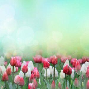 Script hypnotique – Induction Mai: Bouquet de couleurs