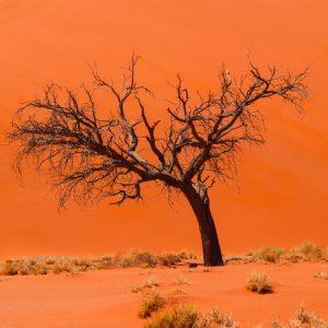 Script hypnotique - L'arbre de la Solitude (métaphore thérapeutique)