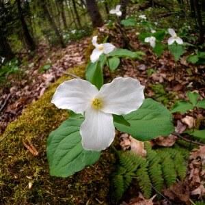 Script hypnotique - Le réveil de la nature - redécouvrir le calme intérieur (induction d'avril)