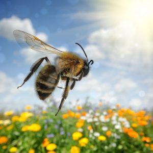 Script hypnotique – Vaincre la phobie des abeilles