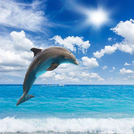 Texte hypnotique – RELAXATION MÉTAPHORIQUE – Le dauphin