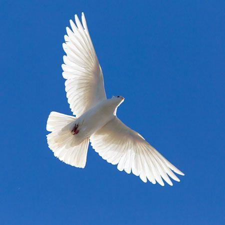 Texte hypnotique – RELAXATION MÉTAPHORIQUE – L'oiseau