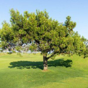 Texte hypnotique - L'arbre de la résilience (visualisation)